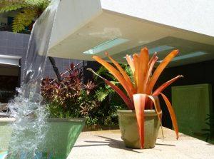Tropical Plants2