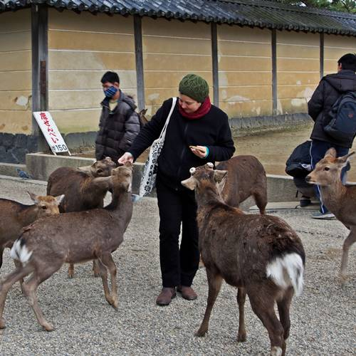 Feeding the deer at Nara