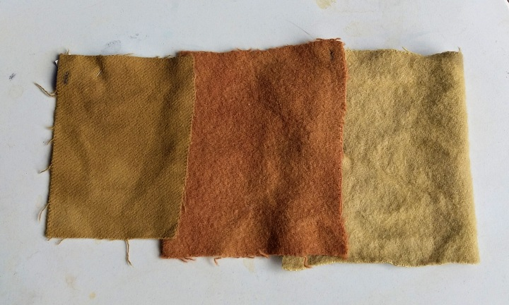 Results from 3 different types of eucalyptus leaves